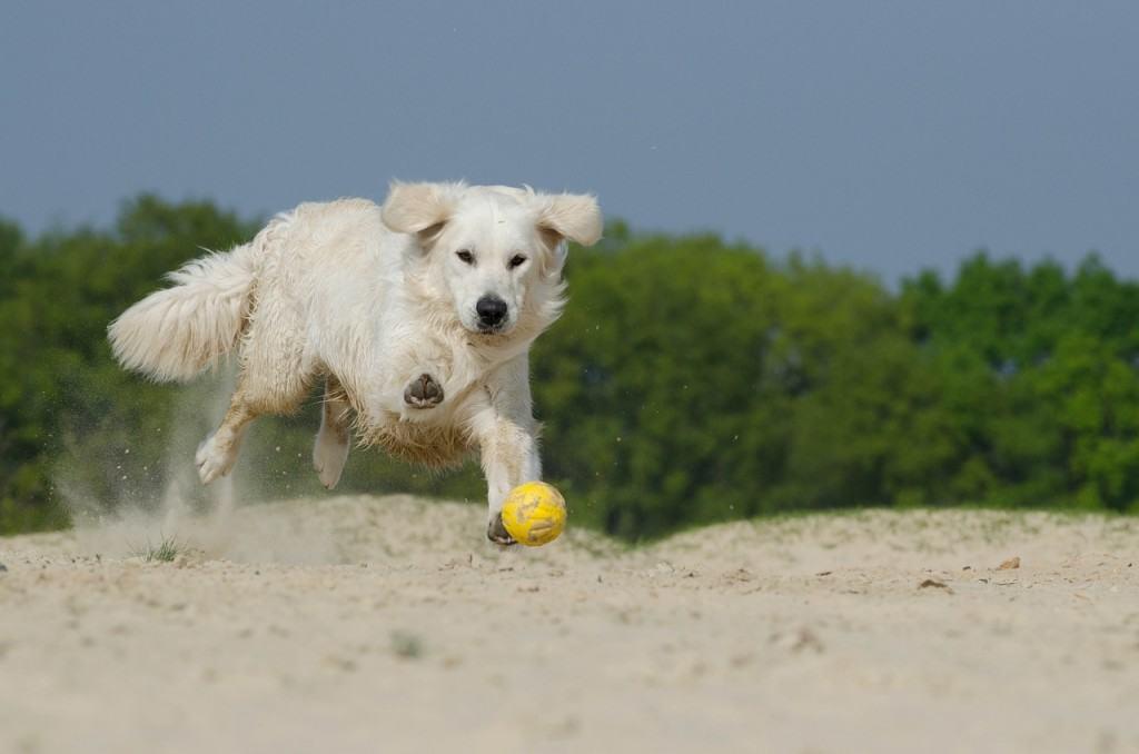 vacanze-col-cane