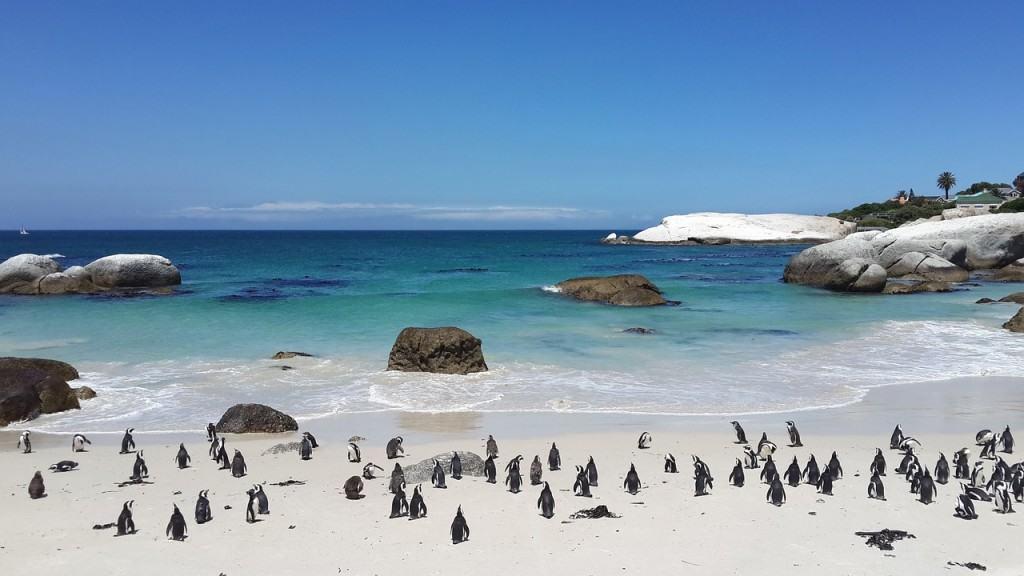 spiaggia-di-pinguini