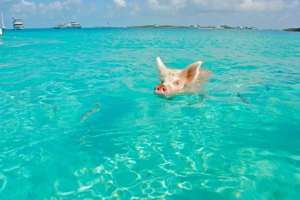 staniel-cay-bahamas